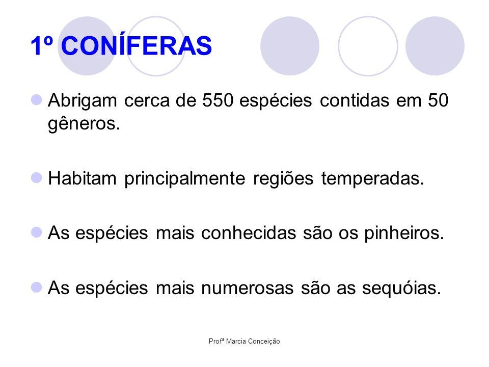 Profª Marcia Conceição 1º CONÍFERAS Abrigam cerca de 550 espécies contidas em 50 gêneros. Habitam principalmente regiões temperadas. As espécies mais