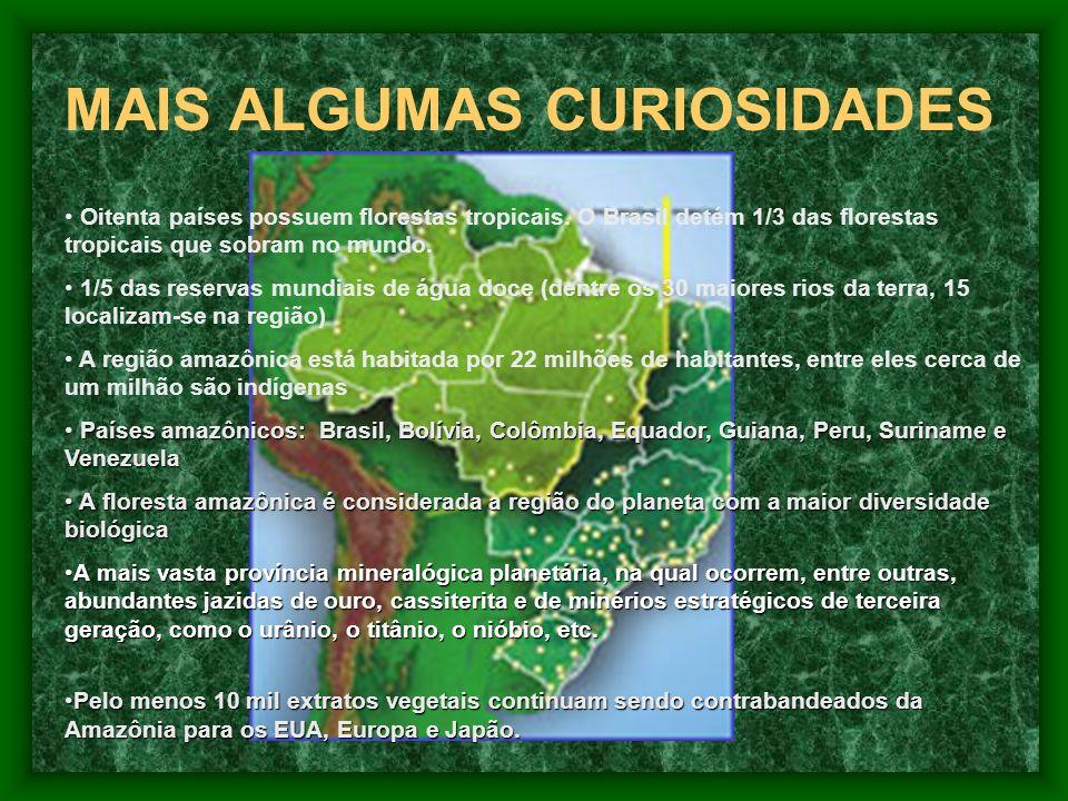 MAIS ALGUMAS CURIOSIDADES Oitenta países possuem florestas tropicais.