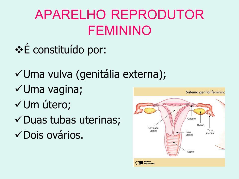 APARELHO REPRODUTOR FEMININO É constituído por: Uma vulva (genitália externa); Uma vagina; Um útero; Duas tubas uterinas; Dois ovários.