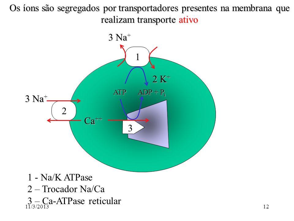 11/3/201311 Os canais iônicos são proteínas que formam poros que passam íons Canal iônico Membrana Canais podem ser seletivos para potássio, sódio, cá