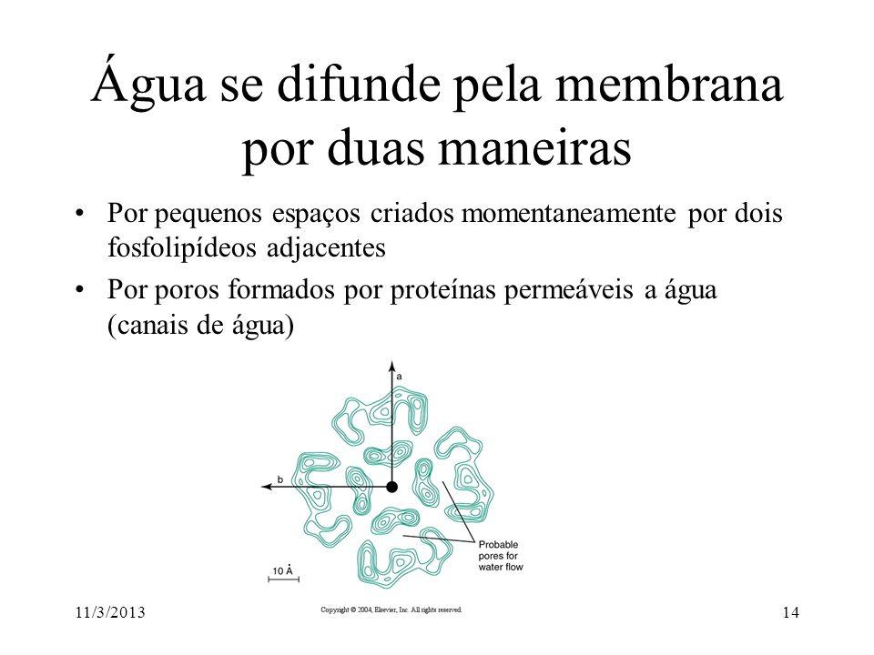 11/3/201313 Transporte ativo significa o transporte de substâncias contra seu gradiente químico às custas de gasto energético 3 Na + 2 K + ATP ADP + P