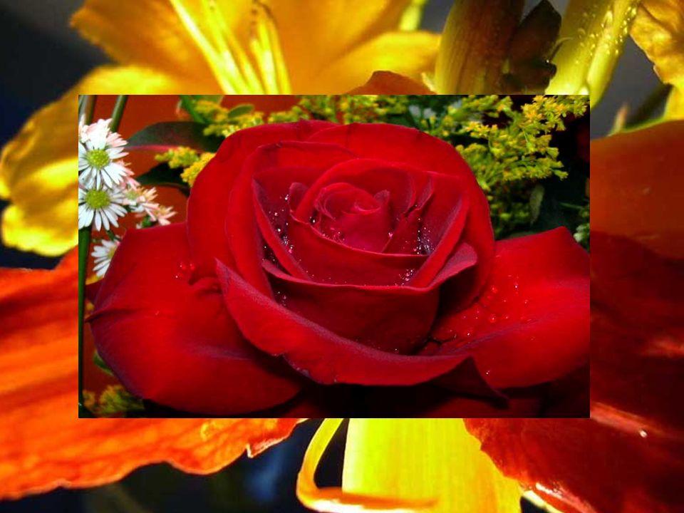 Observe as flores... E as Tuas mãos queridas, ansiosas, Virão p`ra me afagar e junto a Ti, Tal como outrora, Mãe! Está Jesus!