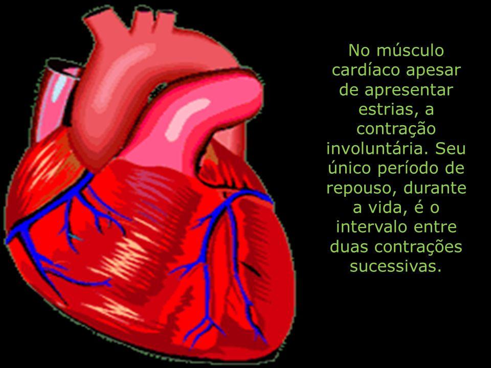 No músculo cardíaco apesar de apresentar estrias, a contração involuntária. Seu único período de repouso, durante a vida, é o intervalo entre duas con