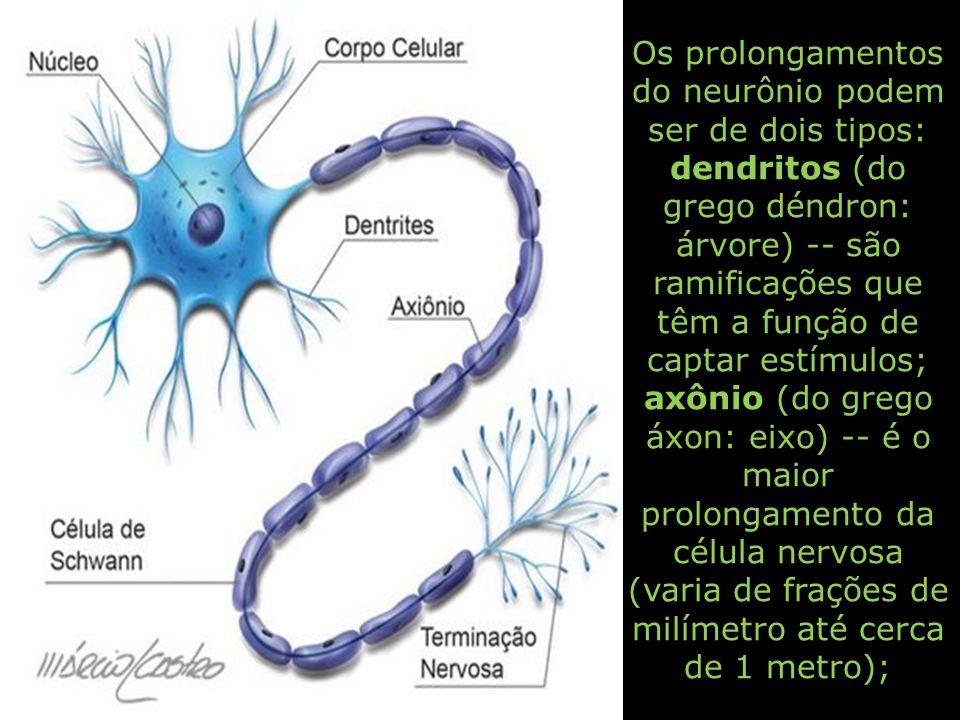 Os prolongamentos do neurônio podem ser de dois tipos: dendritos (do grego déndron: árvore) -- são ramificações que têm a função de captar estímulos;