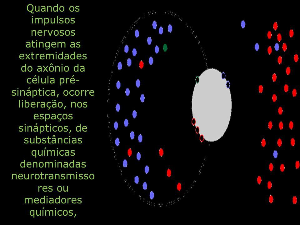 Quando os impulsos nervosos atingem as extremidades do axônio da célula pré- sináptica, ocorre liberação, nos espaços sinápticos, de substâncias quími