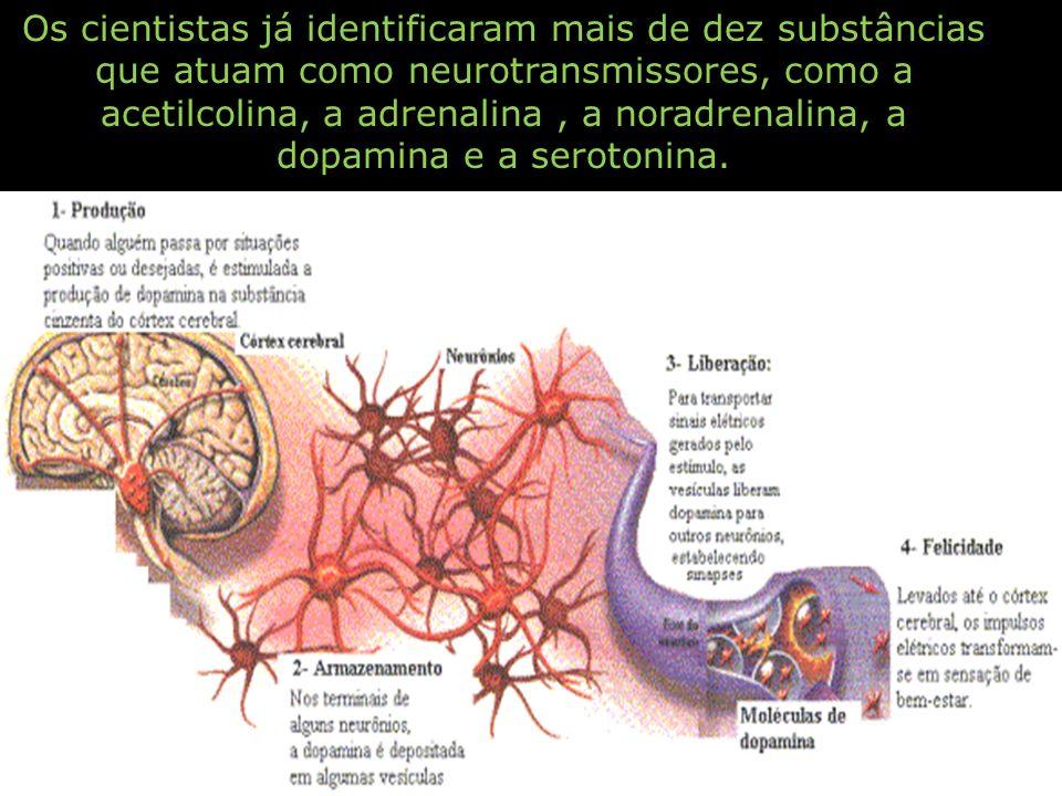 Os cientistas já identificaram mais de dez substâncias que atuam como neurotransmissores, como a acetilcolina, a adrenalina, a noradrenalina, a dopami