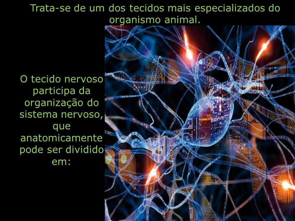 Trata-se de um dos tecidos mais especializados do organismo animal. O tecido nervoso participa da organização do sistema nervoso, que anatomicamente p