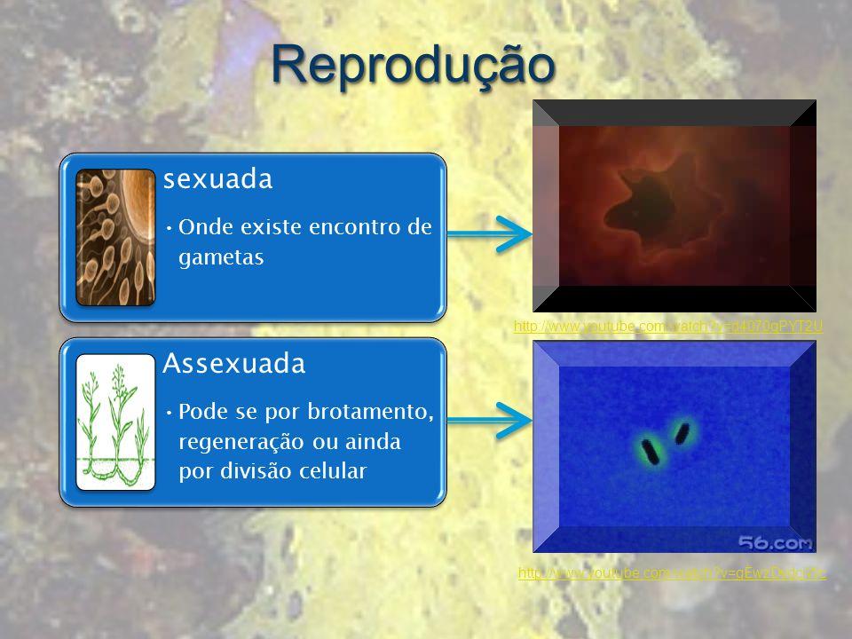 sexuada Onde existe encontro de gametas Assexuada Pode se por brotamento, regeneração ou ainda por divisão celular http://www.youtube.com/watch?v=d407