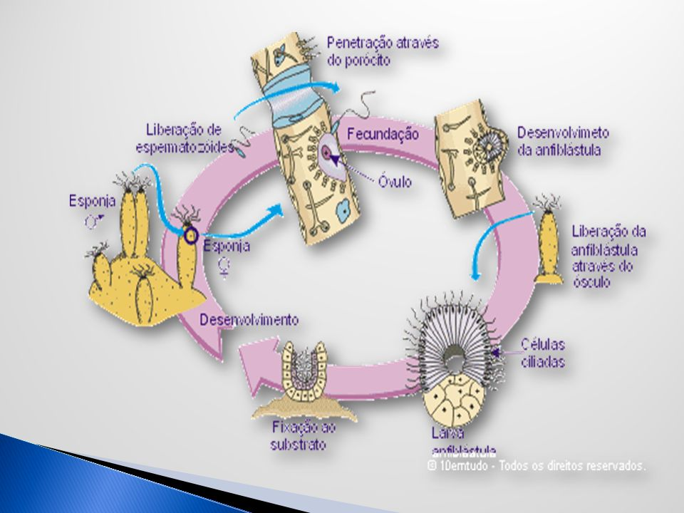 http://www.escolavesper.com.br/poriferos.htm http://www.animalshow.hpg.ig.com.br/index.htm http://www.saudeanimal.com.brBibliografia Atenção Pessoal.