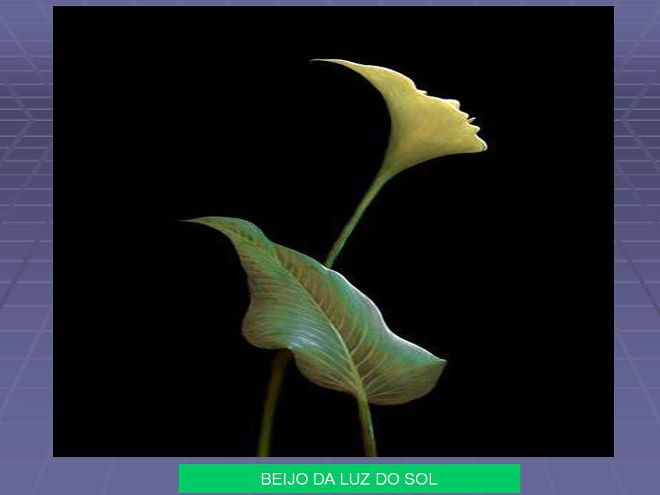Obras de Octavio Ocampo Pintor Celayense nascido em 28 de fevereiro de 1943 http://user.qzone.qq.com/895149484
