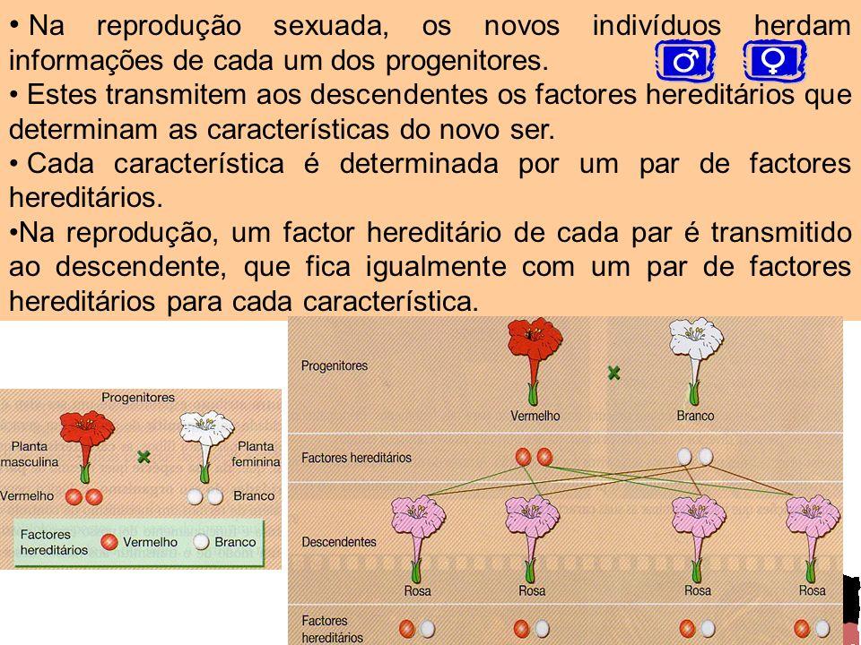 Na reprodução sexuada, os novos indivíduos herdam informações de cada um dos progenitores. Estes transmitem aos descendentes os factores hereditários