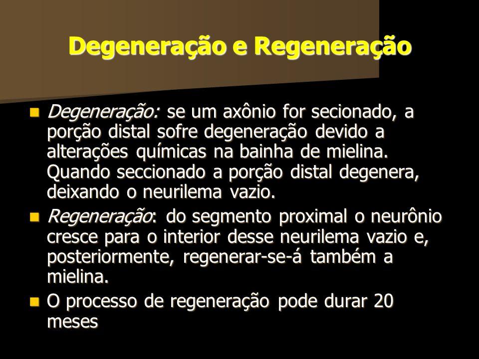 Degeneração e Regeneração Degeneração: se um axônio for secionado, a porção distal sofre degeneração devido a alterações químicas na bainha de mielina