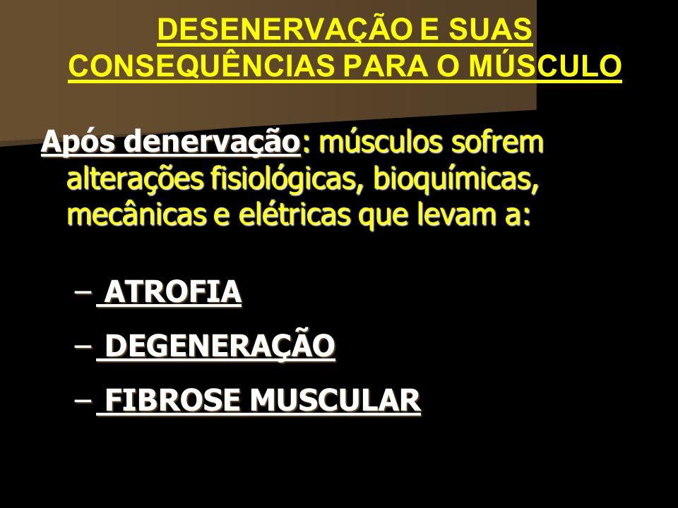 DESENERVAÇÃO E SUAS CONSEQUÊNCIAS PARA O MÚSCULO Após denervação: músculos sofrem alterações fisiológicas, bioquímicas, mecânicas e elétricas que leva