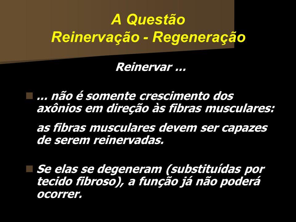 A Questão Reinervação - Regeneração Reinervar...... não é somente crescimento dos axônios em direção às fibras musculares: as fibras musculares devem