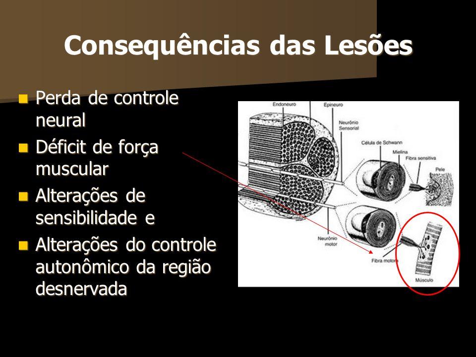 Consequências das Lesões Perda de controle neural Perda de controle neural Déficit de força muscular Déficit de força muscular Alterações de sensibili