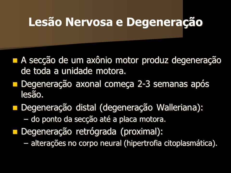 Lesão Nervosa e Degeneração A secção de um axônio motor produz degeneração de toda a unidade motora. A secção de um axônio motor produz degeneração de