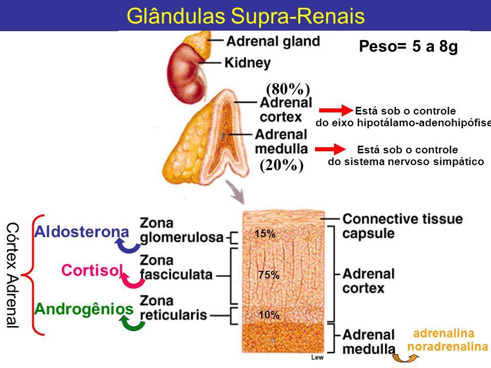 Glândulas Supra-Renais Aldosterona Cortisol Androgênios Peso= 5 a 8g (80%) (20%) Córtex Adrenal 15% 75% 10% adrenalina noradrenalina Está sob o contro