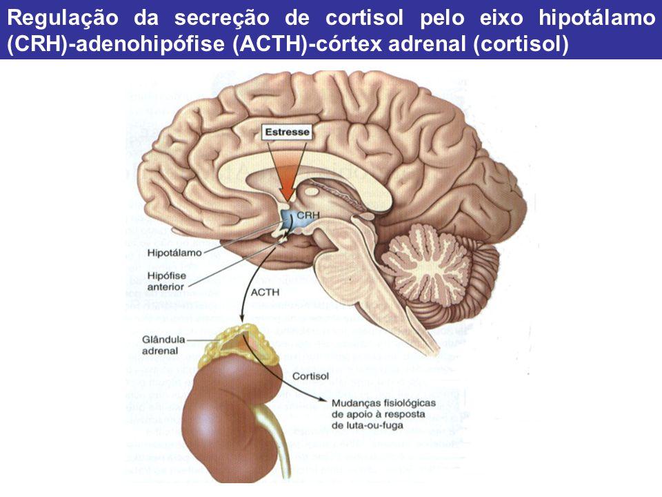Regulação da secreção de cortisol pelo eixo hipotálamo (CRH)-adenohipófise (ACTH)-córtex adrenal (cortisol)