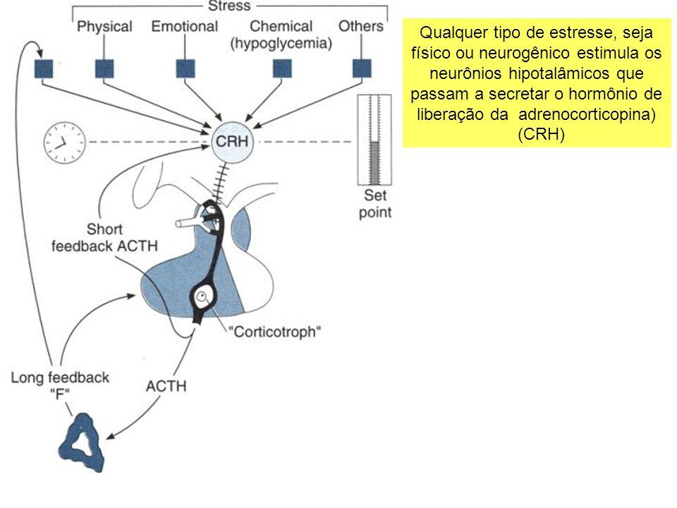 Qualquer tipo de estresse, seja físico ou neurogênico estimula os neurônios hipotalâmicos que passam a secretar o hormônio de liberação da adrenocorti