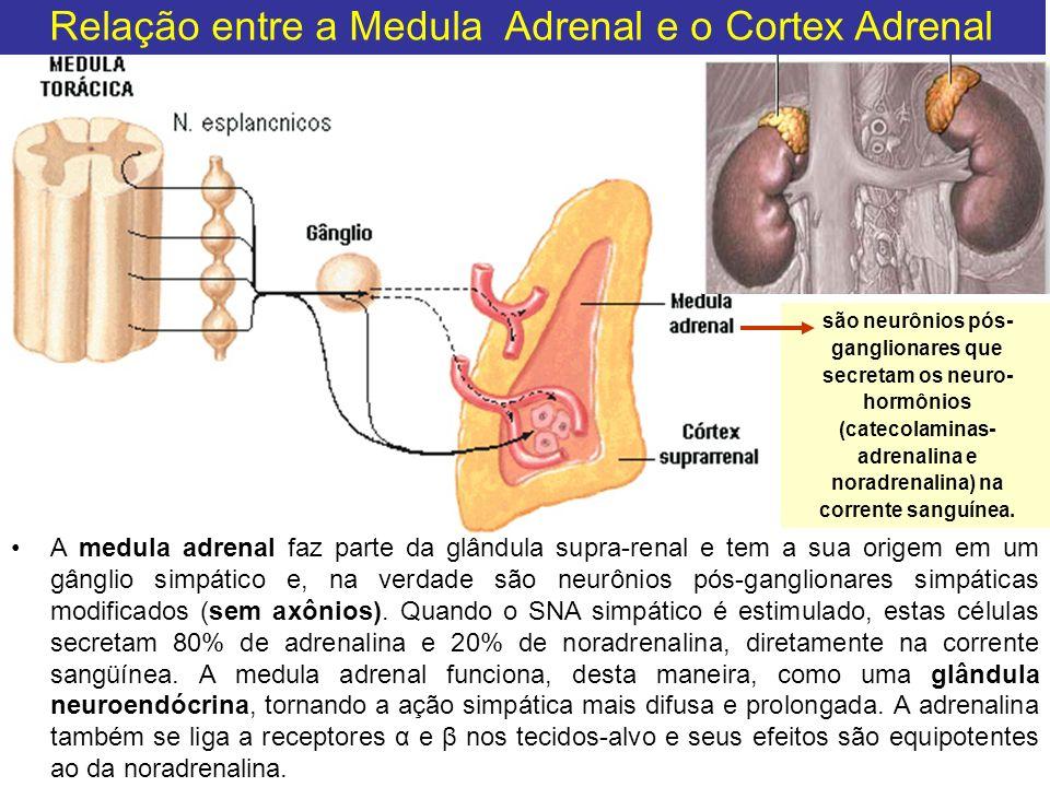 são neurônios pós- ganglionares que secretam os neuro- hormônios (catecolaminas- adrenalina e noradrenalina) na corrente sanguínea. Relação entre a Me