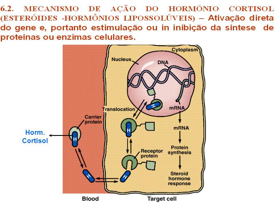 Consequências do excesso de cortisol Hiperglicemia: ocorre porque o cortisol antagoniza poderosamente as ações da insulina sobre o metabolismo da glicose (resistência periférica a insulina), inibindo a captação de glicose estimulada pela insulina por parte do tecido muscular e adiposo ( efeito diabetogênico e antiinsulínico).