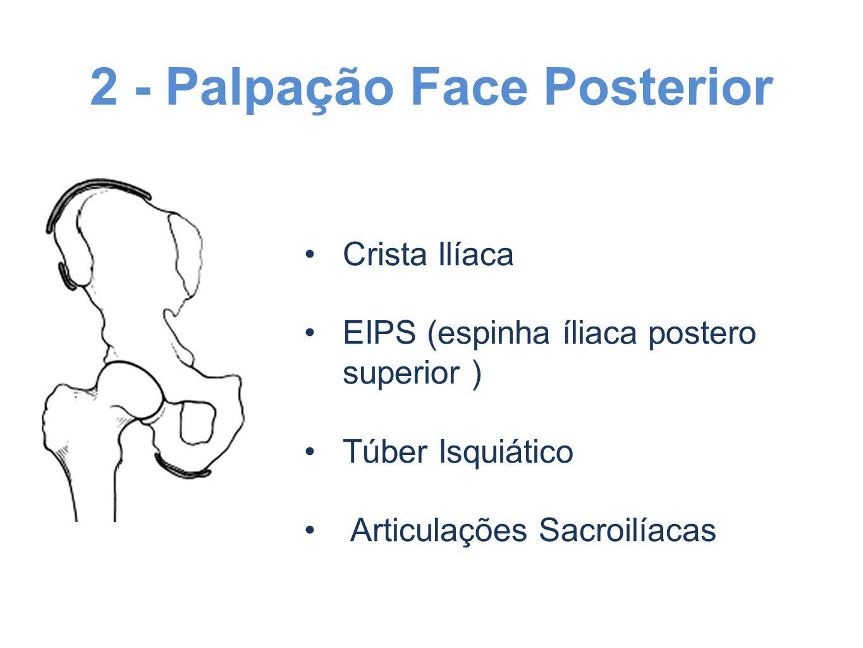 2 - Palpação Face Posterior Crista Ilíaca EIPS (espinha íliaca postero superior ) Túber Isquiático Articulações Sacroilíacas