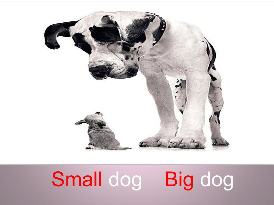 Big dogSmall dog