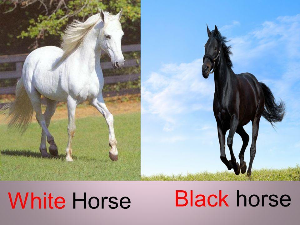 Black horse White Horse