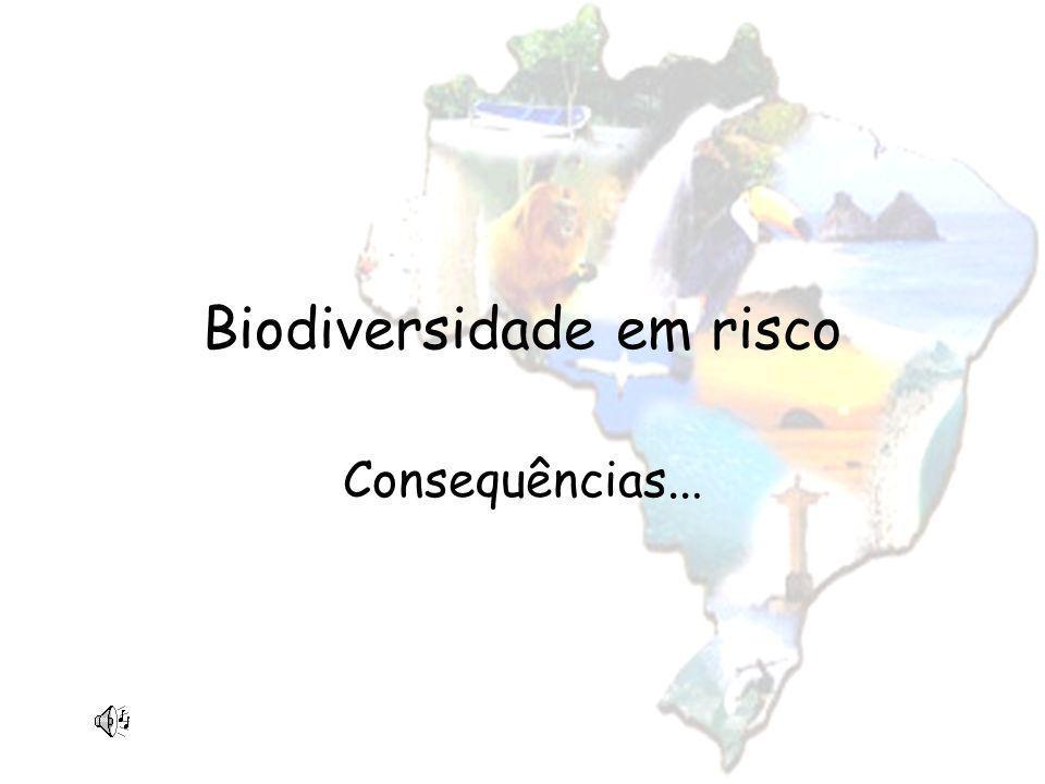 Biodiversidade em risco Consequências...