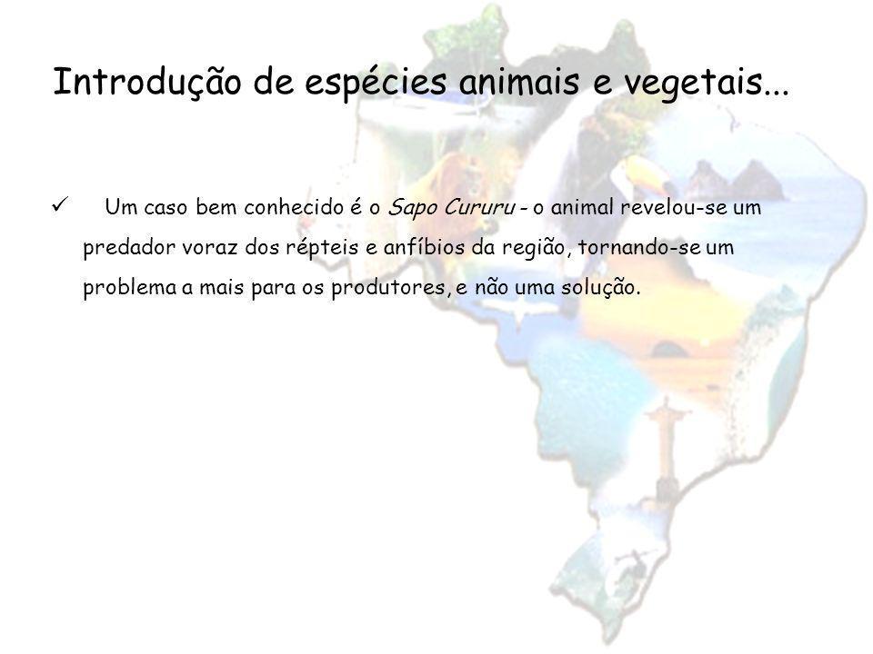 Introdução de espécies animais e vegetais... Um caso bem conhecido é o Sapo Cururu - o animal revelou-se um predador voraz dos répteis e anfíbios da r
