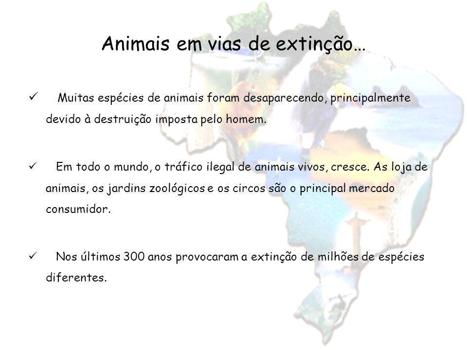 Muitas espécies de animais foram desaparecendo, principalmente devido à destruição imposta pelo homem. Em todo o mundo, o tráfico ilegal de animais vi