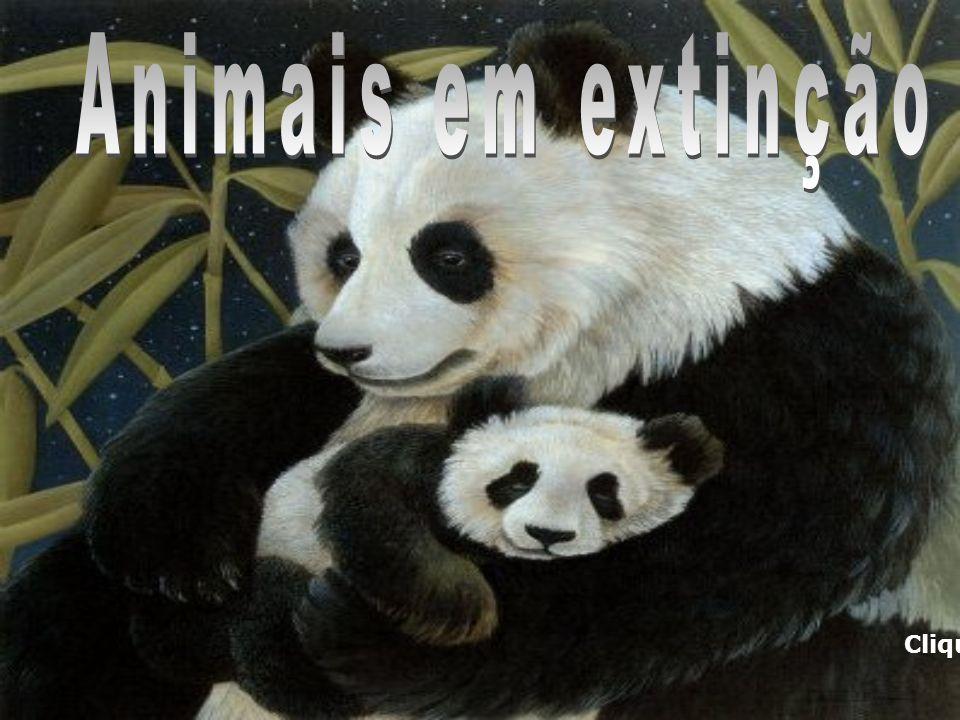 RODEIO E MAUS TRATOS AOS ANIMAIS MAUS TRATOS AOS ANIMAIS No Grande ABC e no Brasil ainda temos que conviver com práticas cruéis de maus tratos aos animais.