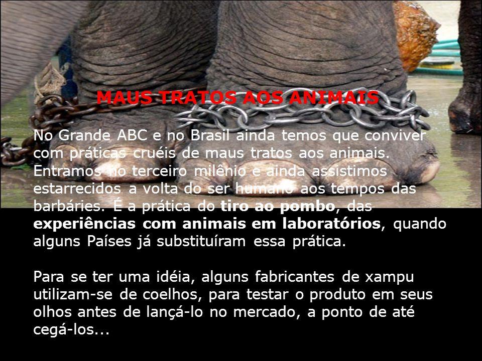 que eu posso fazer para evitar o tráfico de animais silvestres? Não compre objetos e bijuterias com penas de animais. Conheça a Lei de Crimes Ambienta