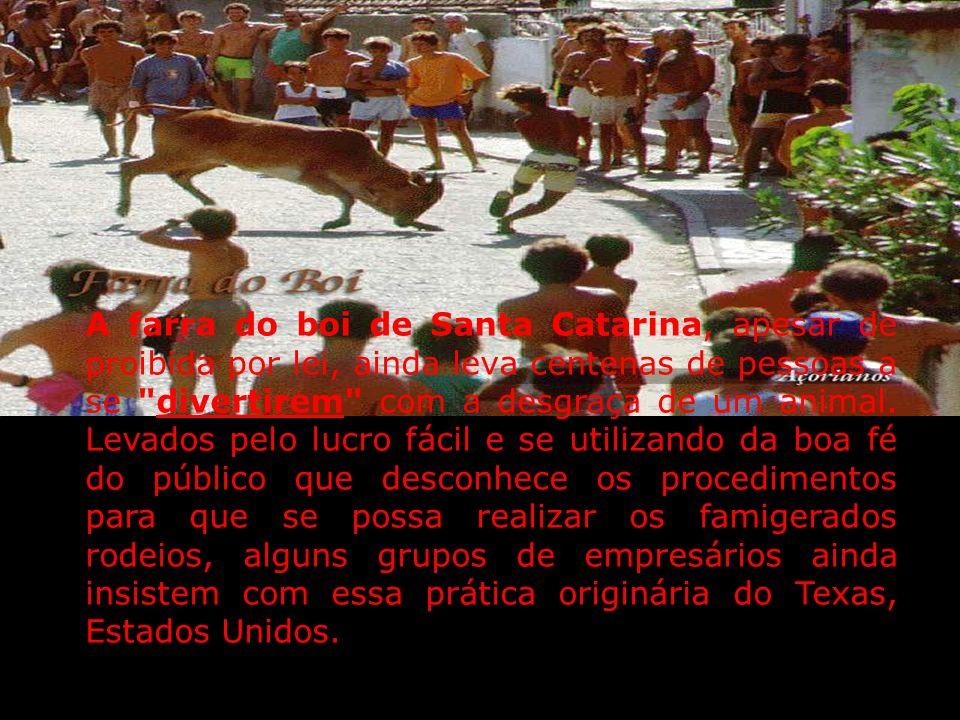 RODEIO E MAUS TRATOS AOS ANIMAIS MAUS TRATOS AOS ANIMAIS No Grande ABC e no Brasil ainda temos que conviver com práticas cruéis de maus tratos aos ani