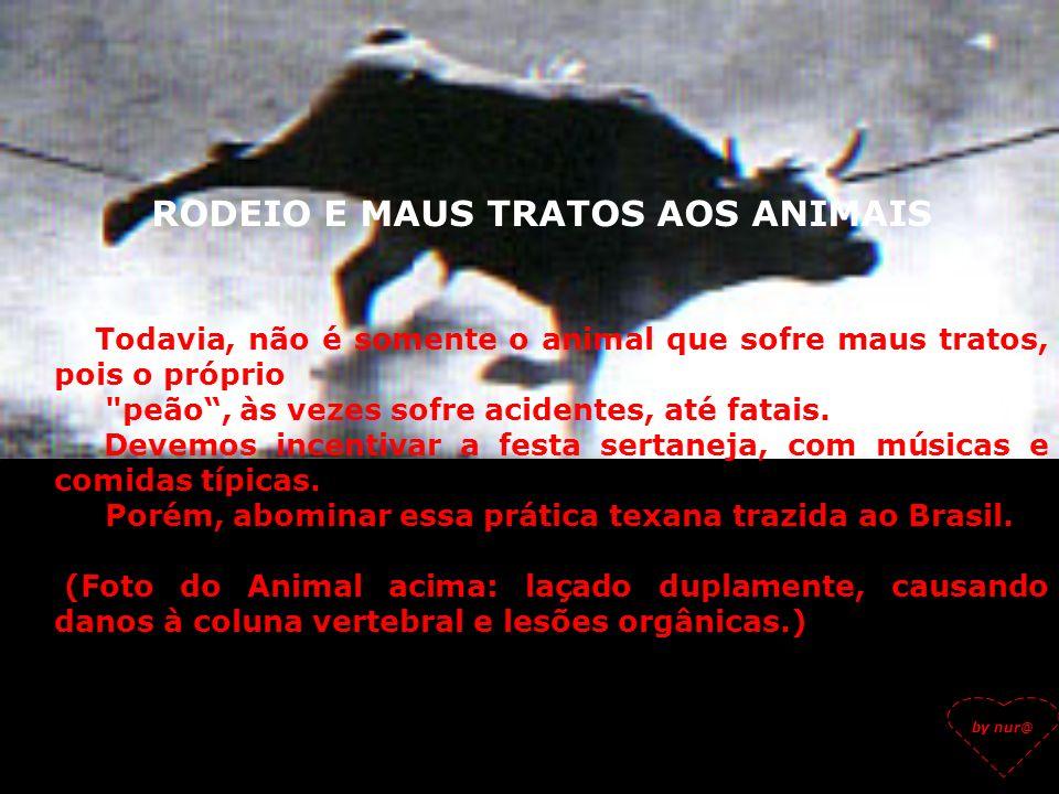 RODEIO E MAUS TRATOS AOS ANIMAIS No Grande ABC, várias cidades já aboliram através de leis, essa farsa chamada rodeio, a partir de um trabalho desenvo