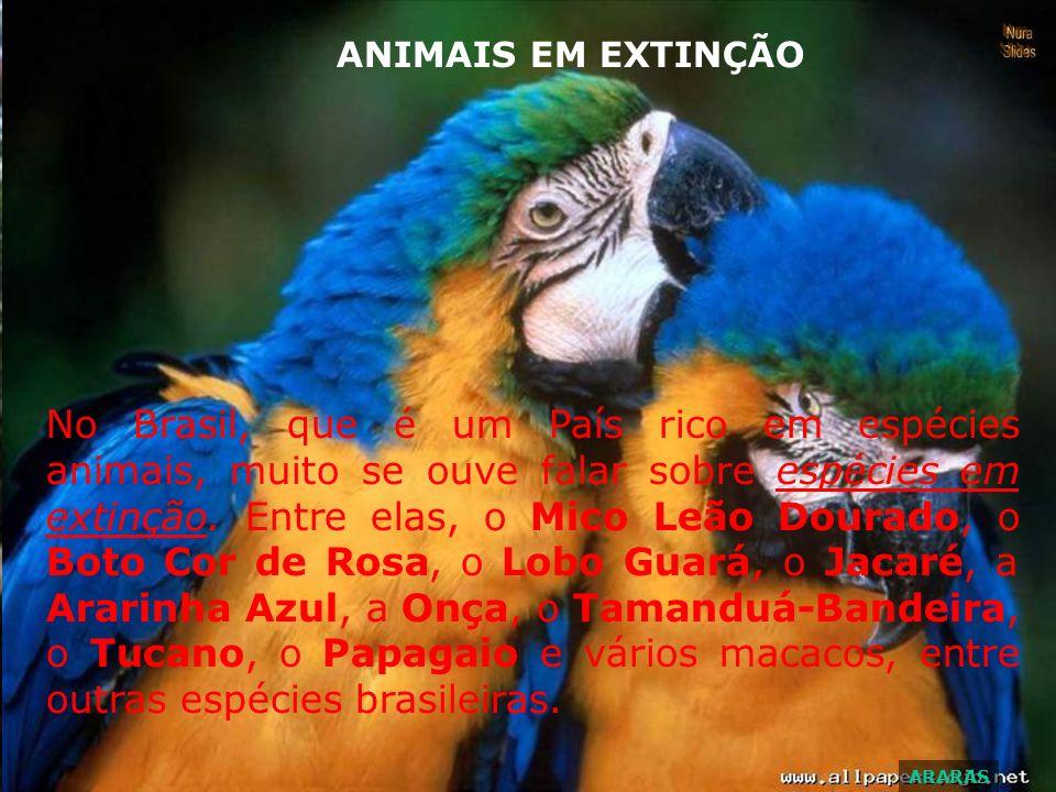 No Brasil, que é um País rico em espécies animais, muito se ouve falar sobre espécies em extinção.