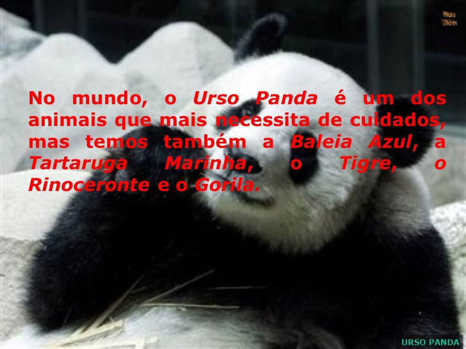 No mundo, o Urso Panda é um dos animais que mais necessita de cuidados, mas temos também a Baleia Azul, a Tartaruga Marinha, o Tigre, o Rinoceronte e o Gorila.
