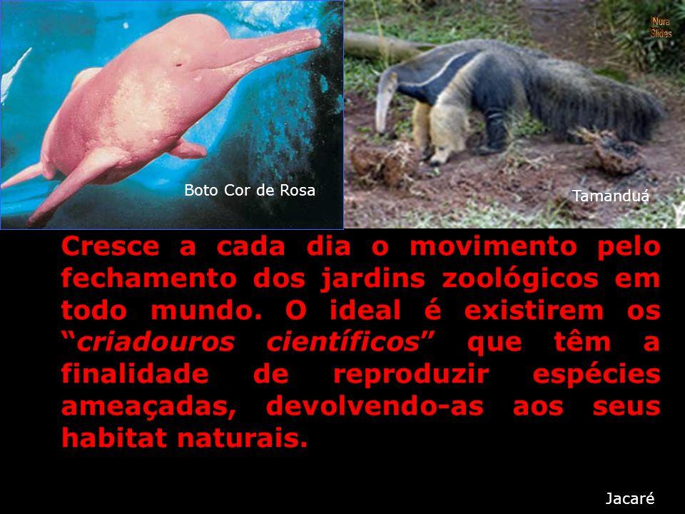 O hábito do brasileiro de aprisionar animais silvestres, principalmente pássaros, tem preocupado a comunidade científica mundial. O contrabando dessas
