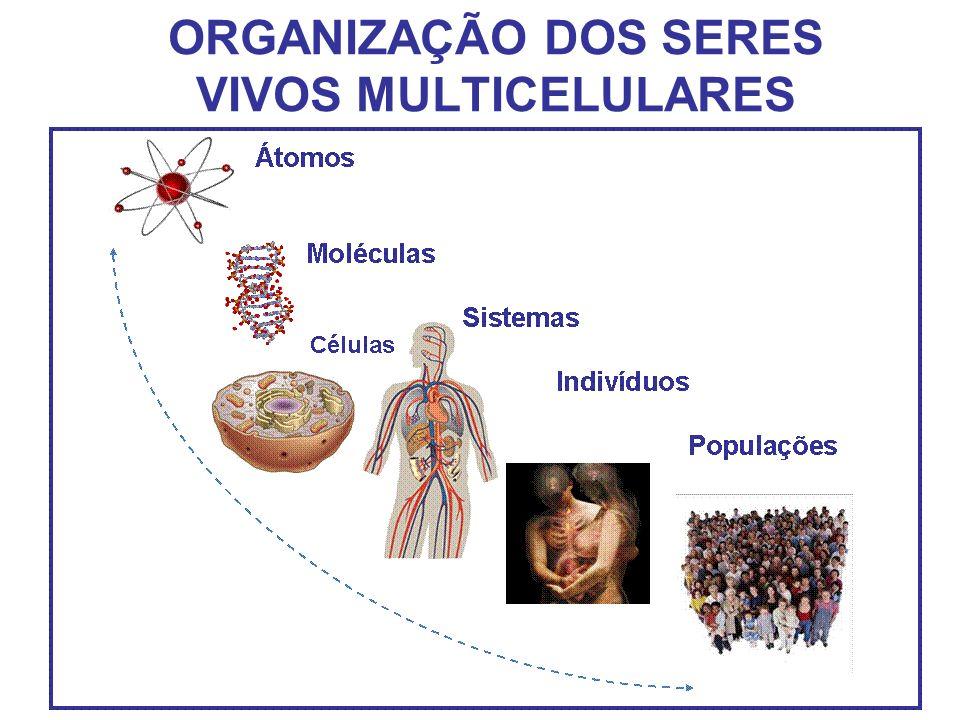 ORGANIZAÇÃO DOS SERES VIVOS MULTICELULARES