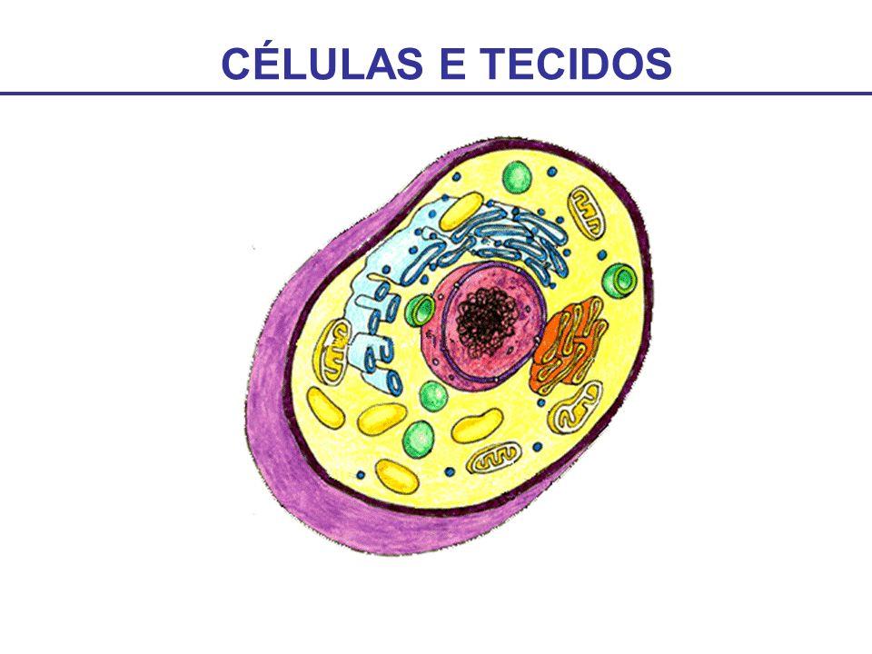 CÉLULAS E TECIDOS