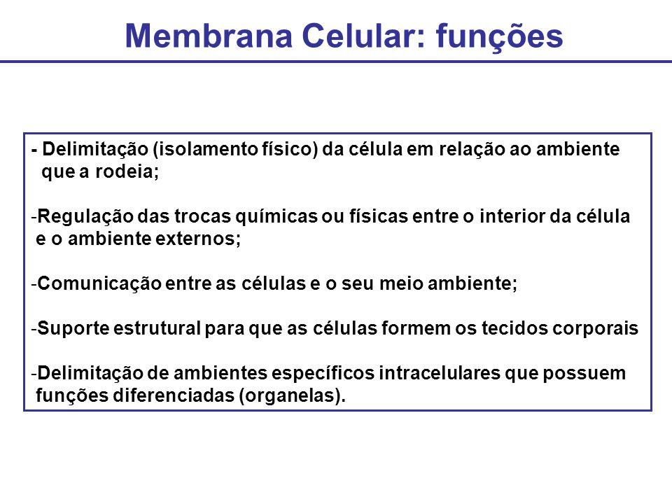 Membrana Celular: funções - Delimitação (isolamento físico) da célula em relação ao ambiente que a rodeia; -Regulação das trocas químicas ou físicas e