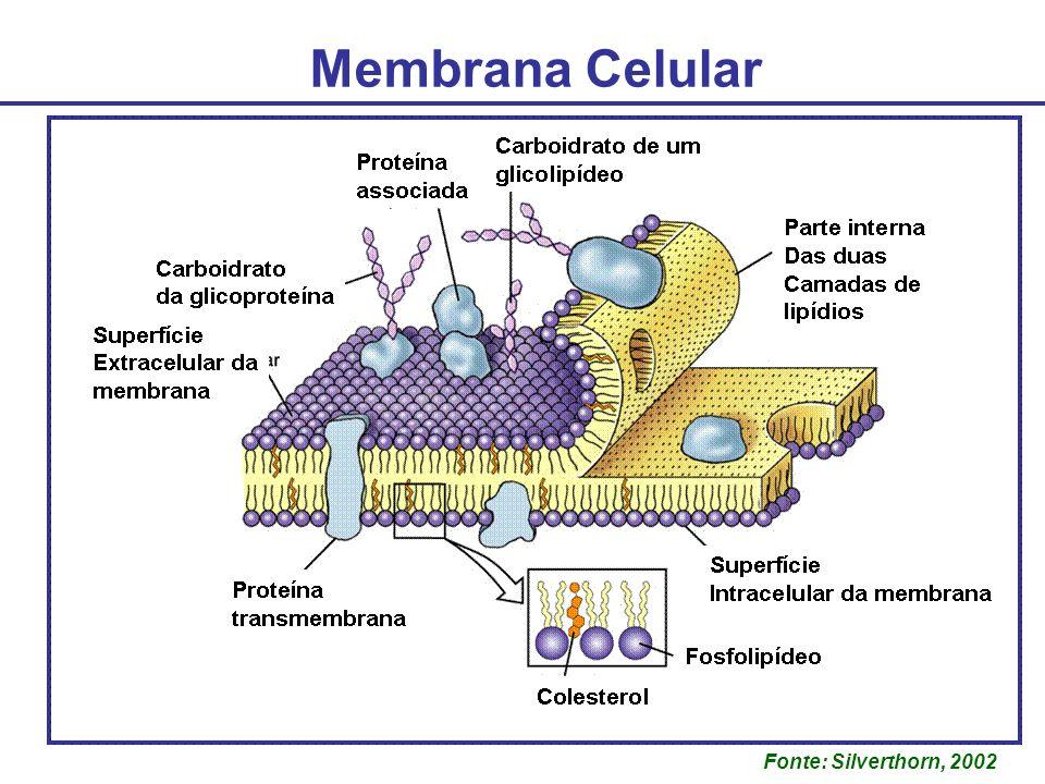 Membrana Celular Fonte: Silverthorn, 2002