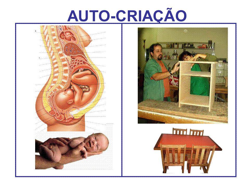 AUTO-CRIAÇÃO