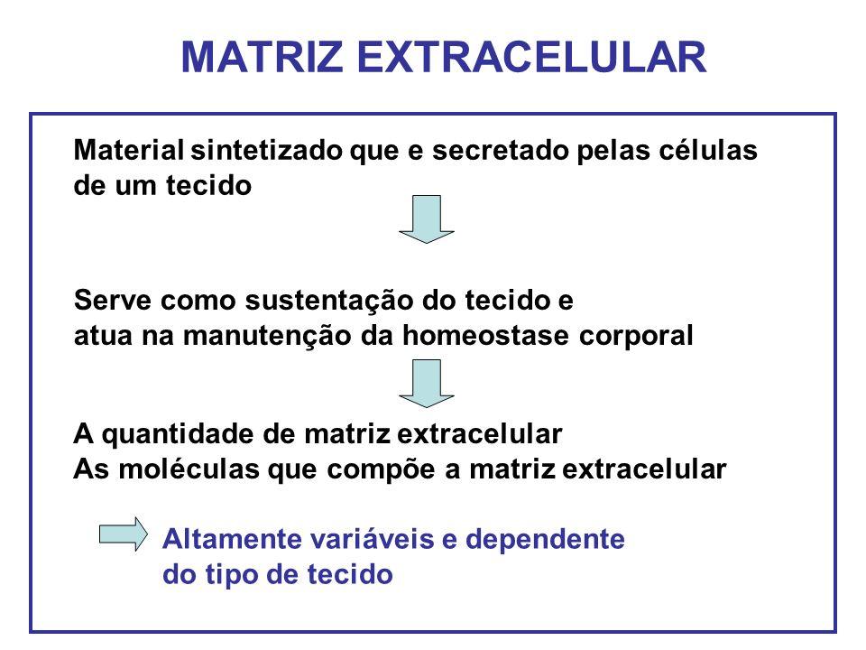 MATRIZ EXTRACELULAR Material sintetizado que e secretado pelas células de um tecido A quantidade de matriz extracelular As moléculas que compõe a matr
