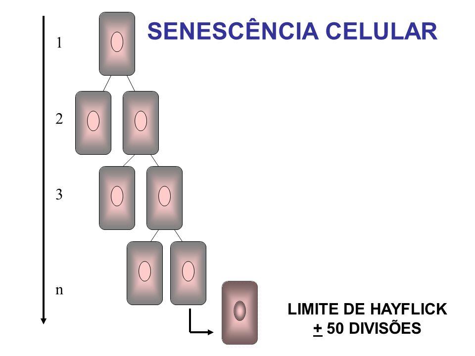 SENESCÊNCIA CELULAR 123n123n LIMITE DE HAYFLICK + 50 DIVISÕES