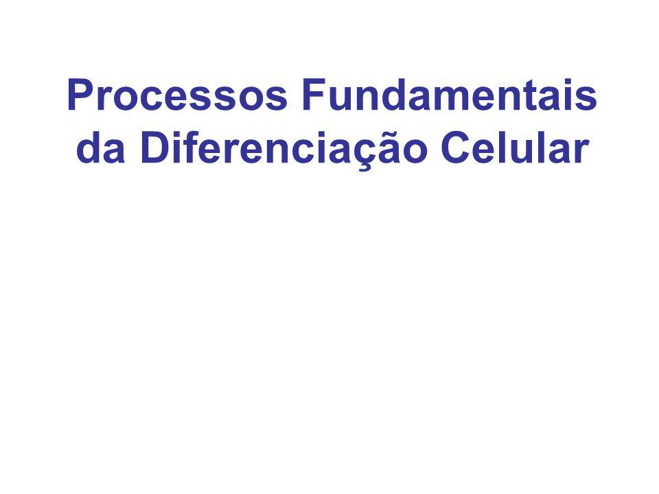Processos Fundamentais da Diferenciação Celular
