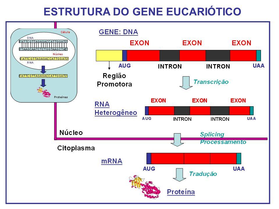 ESTRUTURA DO GENE EUCARIÓTICO