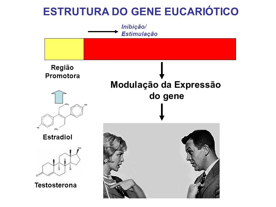 Região Promotora Estradiol Modulação da Expressão do gene Testosterona Inibição/ Estimulação