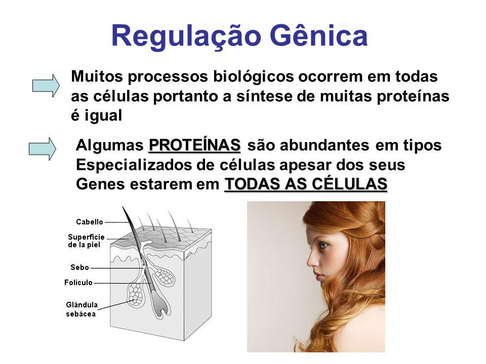 Regulação Gênica Muitos processos biológicos ocorrem em todas as células portanto a síntese de muitas proteínas é igual PROTEÍNAS Algumas PROTEÍNAS sã
