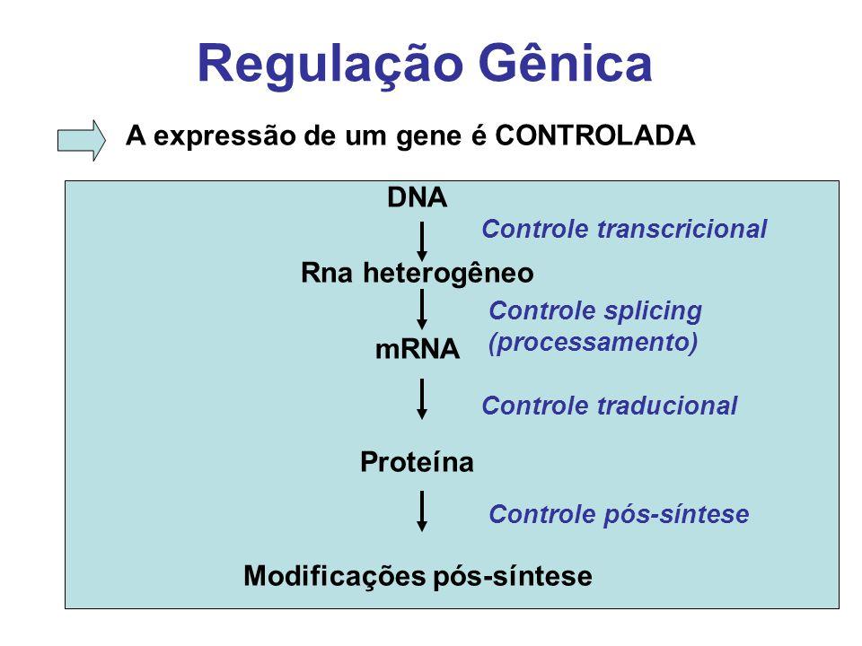 Regulação Gênica A expressão de um gene é CONTROLADA DNA Rna heterogêneo mRNA Proteína Modificações pós-síntese Controle transcricional Controle splic